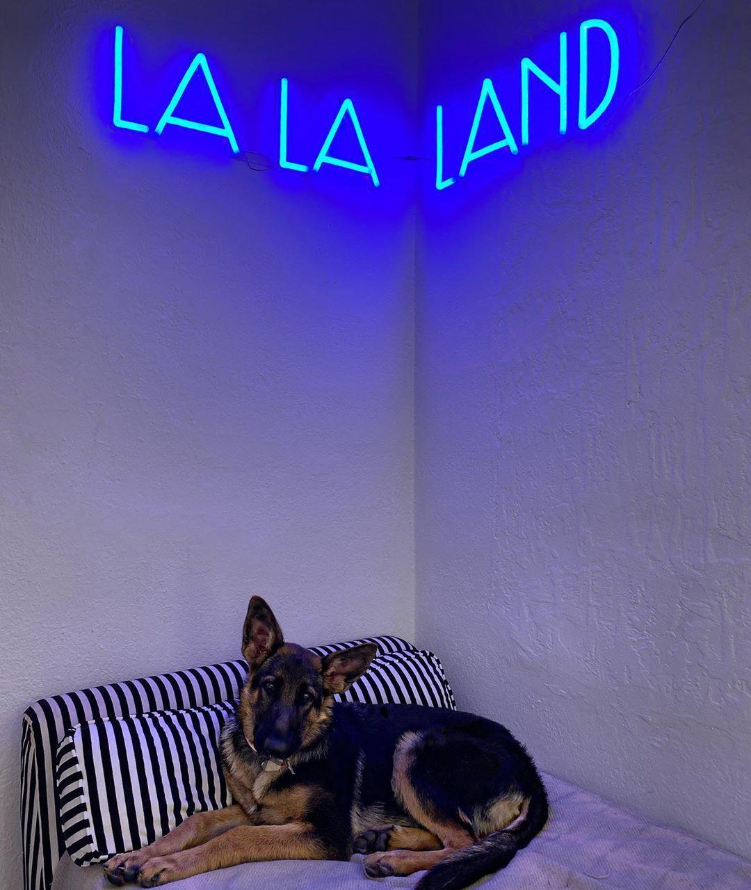 custom neon sign lalaland