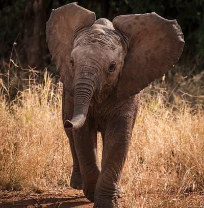 elephant neon light
